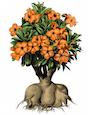 Forme de bonsai